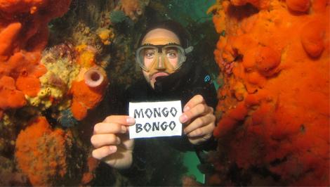 Mongobongo